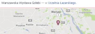 warszawska wystawia gołębi - to nie semcamp